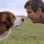 dogs-purpose21